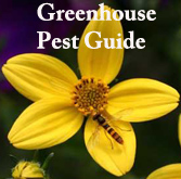 Greenhouse Pest Guide